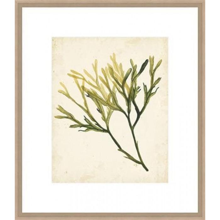 Watercolour Sea Grass V 74x64cm