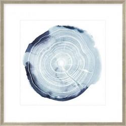 Tree Ring Overlay III