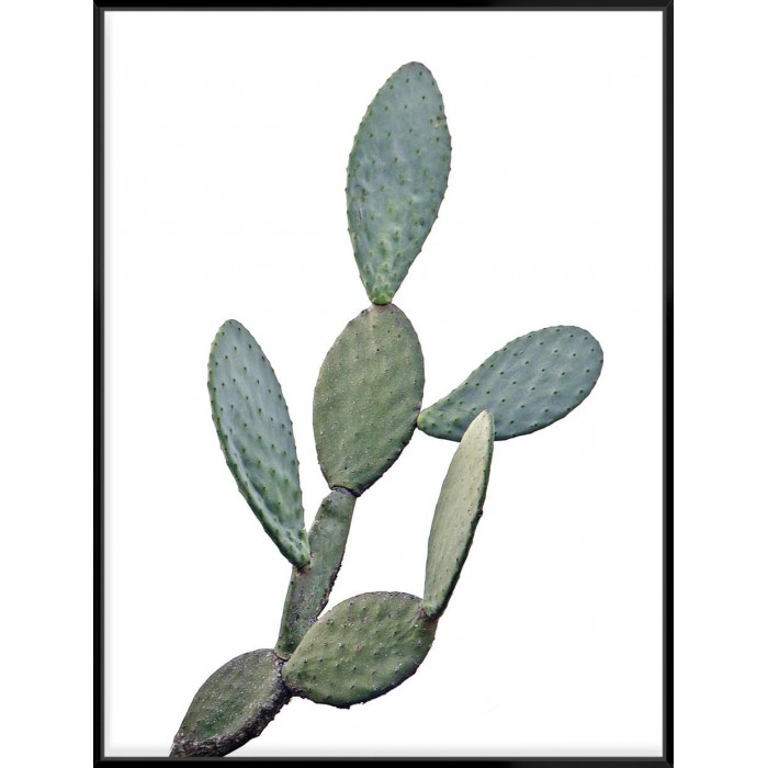 Barberry Fig Cactus - Canvas