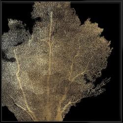 Honeycomb Coral I - Canvas