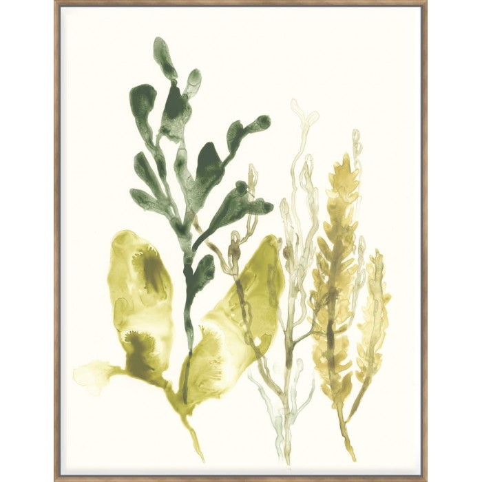 Kelp Collection III - Canvas 123x93cm