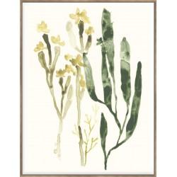 Kelp Collection IV - Canvas 123x93cm
