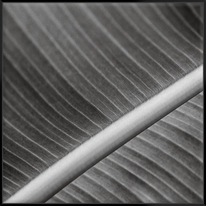 Palm Leaves I - Canvas