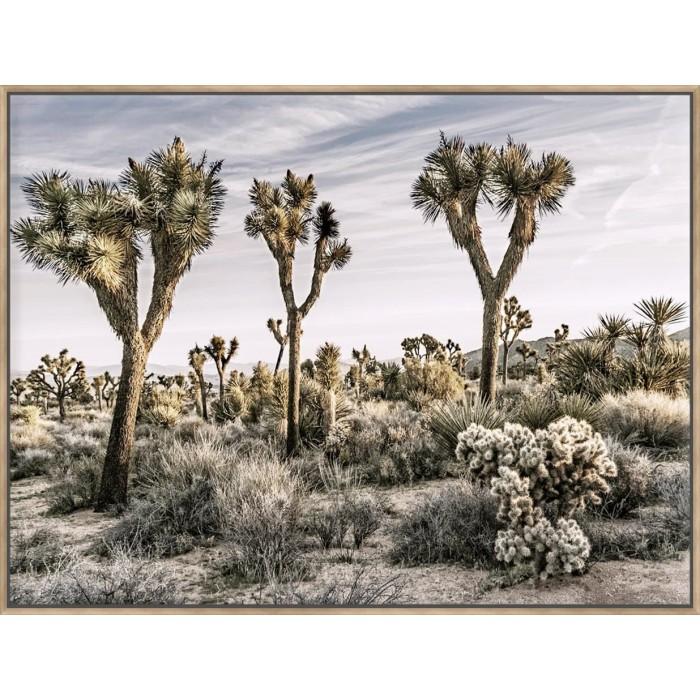 Views Of Joshua Tree IX - Canvas