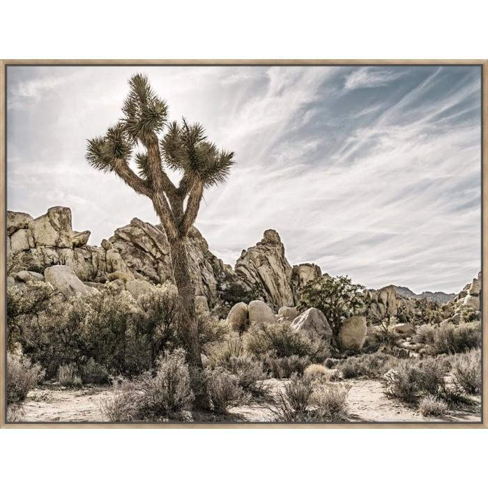 Views Of Joshua Tree VIII - Canvas